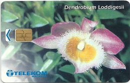 Malaysia - Telekom Malaysia - Dendrobium Loddigesii Flower - Chip 20RM, Used - Malaysia