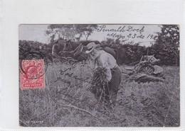 THE REAPER. THE STAR SERIES. G D & D. CIRCULEE PENARTH TO BUENOS AIRES. ENGLAND.-BLEUP. - Landbouwers