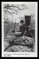 1980  --  VENDANGE A NIEDERMORSCHWIR DANS LE HAUT RHIN  3P591 - Old Paper