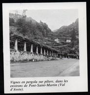 1980  --  VIGNES PRES DE PONT SAINT MARTIN EN VAL D AOSTE   3P595 - Old Paper