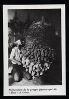 1980  --  PREPARATION DE LA GRAPPE GIGANTESQUE DU BIOU A ARBOIS  JURA    3P596 - Old Paper