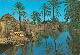 Iraq - Rural Area - Deqar - Iraq