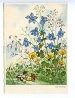 221914 Insect Life Of Mot & Ladybird Baby Carriage BAUMGARTEN - Baumgarten, F.
