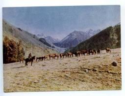 238938 Kyrgyzstan Near Issyk-Kul Lake HORSES Pasture Old - Kyrgyzstan
