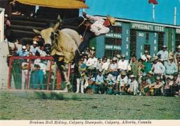 Canada Calgary Brahma Bull Riding Calgary Stampede Rodeo
