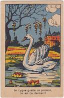 Chromo/image En Carton - Le Cygne Guette Un Poisson Où Est Ce Dernier? - Trade Cards