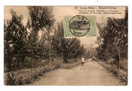 Belgisch Congo Belge Entier Vue 59 Poste Lowa-Plantations Funtumia CP 5c+TP Mols 5c C.Lisala 6/1/1919 Non Voyagée PR5224 - Entiers Postaux
