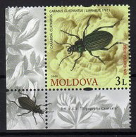 Moldova Moldavia 2009 MNH Fauna Insect Carabida Clatratus Carabus Clathratus - Moldavia