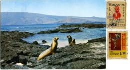ECUADOR  Lobos Marinos Islita De Daphne  Leone Marino  Sea Wolf  Nice Stamps - Ecuador