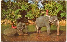 Sri Lanka. Kandy. Elephants Bathing - Sri Lanka (Ceylon)