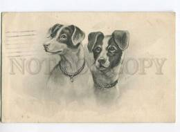 3000153 Portrait Of JACK RUSSELL TERRIER Dogs Vintage PC - Wrestling