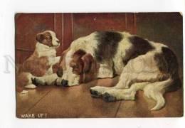 3000171 PUPPY & Sleeping Old Dog Vintage Color PC - Wrestling