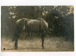 3000174 Thoroughbred HORSE W/ Bridle Vintage PHOTO PC - Wrestling