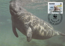 GUYANA - WWF Maximumkarte, Nagelmanati, Karte Mit Zugehöriger Sondermarke - Maximumkarten