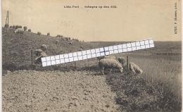 """LILLO-ANTWERPEN """" LILLO FORT-SCHAPEN OP DEN DIJK""""HOELEN 6737 UITGIFTE 26.05.1913 TYPE 5 - Antwerpen"""