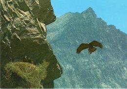 Parco Nazionale Gran Paradiso - Aquila Reale - - Animali