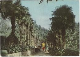 Alupka - The Palm-alley In The Park  -  (Ukrain) - 1963 - Oekraïne