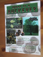 Ohio Buckeye, Aesculus Glabra, Is Ohio's State Tree. Victory Postcards 636815100033 Terrell 02B0224 - Non Classés