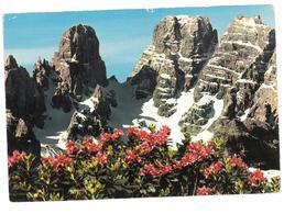 Veneto Monte Cristallo Viaggiata - Italia
