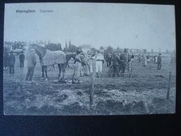 WAREGEM : Les Courses Et Les Sulkys  En 1908 - Waregem