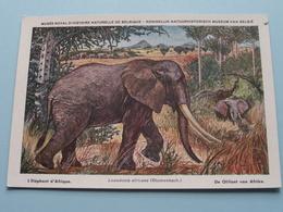 De OLIFANT Van AFRIKA - L'ELEPHANT D'AFRIQUE / Beschermde Zoogdieren Belgisch Congo N° 26 ( Zie Foto's ) ! - Éléphants