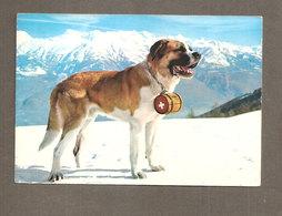 DOG SAN BERNARDO CANE  CARTOLINA  VIAGGIATA 1976 - Cani