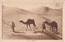 AK Au Désert - Männer Mit Kamelen (34911) - Afrika