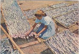 Portugal Nazare  Preparabdo Peixe Para A Seca - Portugal