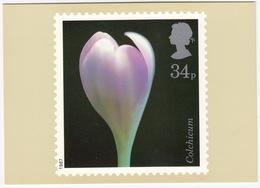 Colchicum - Flowers  (34p Stamp) -  1987 - (U.K.) - Postzegels (afbeeldingen)