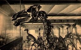 BRUXELLES - Musée Royal D'Histoire Naturelle - La Tête De L'un Des Iguanodons - Monumenten, Gebouwen