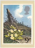 Primroses  - British Flowers  (9p Stamp) -  1979 - (U.K.) - Postzegels (afbeeldingen)