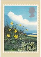 Daffodils  - British Flowers  (10,5p Stamp) -  1979 - (U.K.) - Postzegels (afbeeldingen)