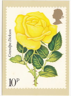 'Grandpa Dickson' - Rose  (10p Stamp) -  1979 - (U.K.) - Postzegels (afbeeldingen)