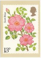 'Sweet Briar' - Rose  (13p Stamp) -  1979 - (U.K.) - Postzegels (afbeeldingen)