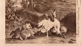 Chromos & Images > Fiches Illustrées > Animaux Le Retour Du Maraudeur - Animales