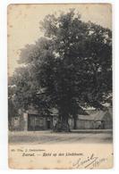 483. Zoersel  -  Zicht Op Den Lindeboom 1906 - Zoersel