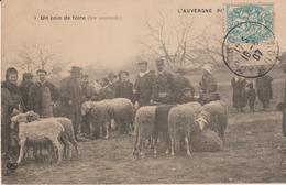 L'auvergne Pittoresque- Un Coin De Foire (les Moutons) - Auvergne Types D'Auvergne