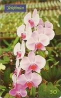 Telefónica - Orquídea (Phalaenophsis) - Brésil