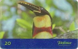 Telefónica - Aves Do Brasil - Araçari-castanho - (Pteroglossus Castanotis) - Brazil