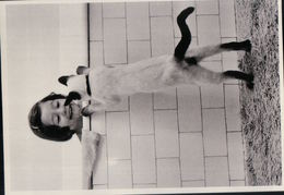 4680A  CHAT   NON  ECRITE - Cats