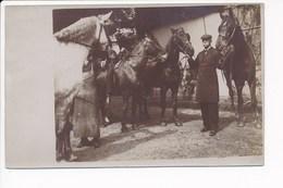 Carte Photo  ( Peut être Avec  Un Maréchal Ferrant  Caché Par Le Cheval )(  Recto Verso ) - Chevaux