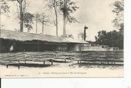 GABON     Sèchage Du Cacao à L'ile Du Perroquet - Gabon
