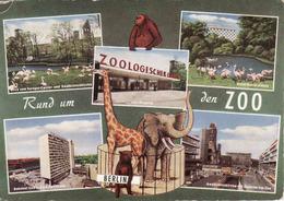 Berlin > Zoologischer Garten, Hotel Hiton, Bahnhof ZOO, Girafe, Elephant,....gebraucht 1967 - Allemagne