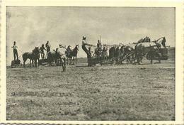 Israel Palestine, Scraping For Orange Plantations (1930s) Tmunia Postcard 202 - Israele
