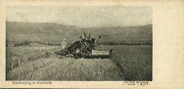Israel Palestine, KINNERET KINNERETH, Harvesting (1920s) Postcard - Israel