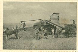 Israel Palestine, Harvest In The Emek (1930s) Tmunia Postcard 206 - Israel