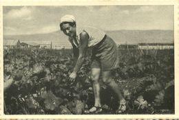 Israel Palestine, GVAT גבת, Kibbutz, Vegetable Garden 1930s Tmunia Postcard 180 - Israel