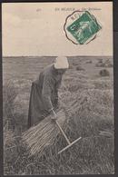 En Beauce - Une Botteleuse - Cultivation