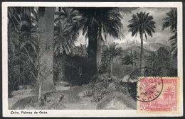 1049 CHILE: Maximum Card Of 14/JA/1942: Ocoa Palm Trees, VF Quality - Chile