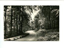 AIZIER (27) - Sous Bois En Forêt De Brotonne - Sonstige Gemeinden